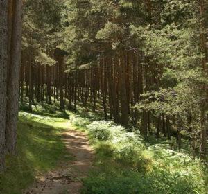 Principales rutas para conocer el Patrimonio Natural